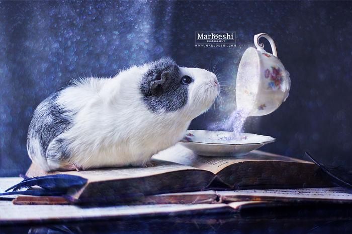 mieps-the-photogenic-piggy-57da554f5adcf__700