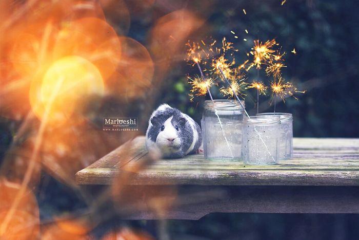 mieps-the-photogenic-piggy-57da5553dc6e9__700