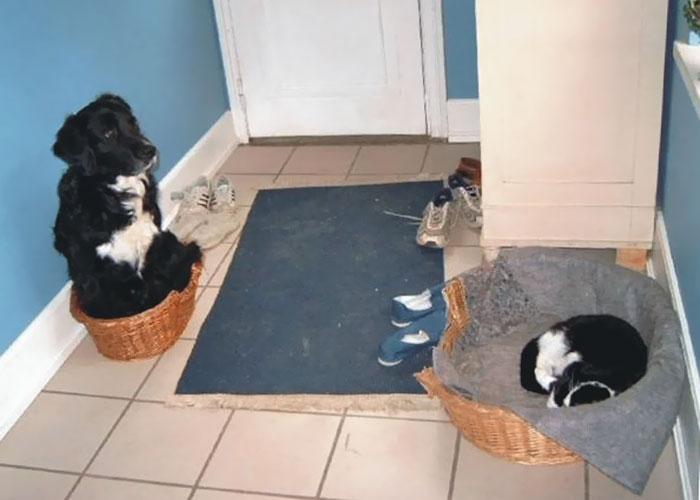 ces-chats-ont-voles-aux-chiens-leur-lit-1