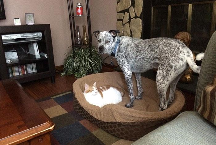 ces-chats-ont-voles-aux-chiens-leur-lit-10