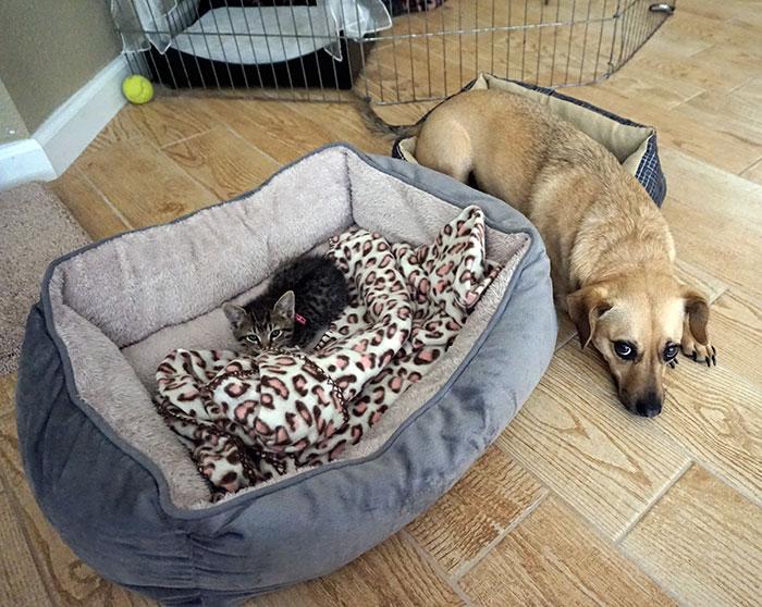 ces-chats-ont-voles-aux-chiens-leur-lit-15