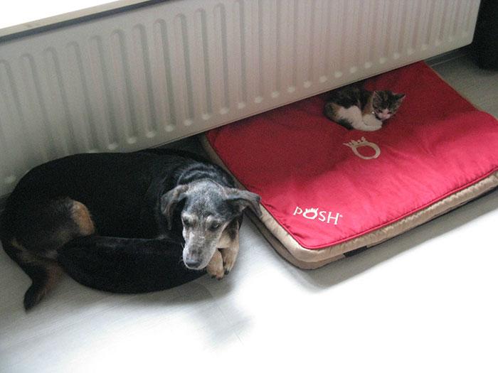 ces-chats-ont-voles-aux-chiens-leur-lit-3