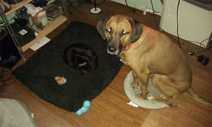 ces-chats-ont-voles-aux-chiens-leur-lit-5