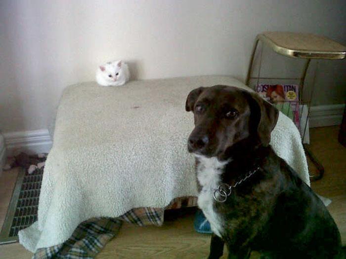 ces-chats-ont-voles-aux-chiens-leur-lit-6