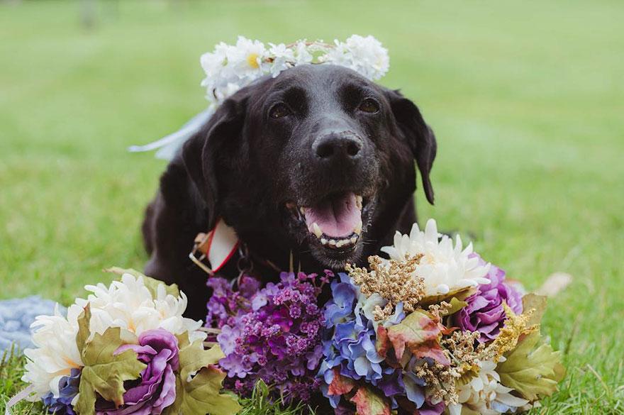 chien-de-15-ans-reste-en-vie-pour-voir-le-mariage-de-sa-proprietaire-1