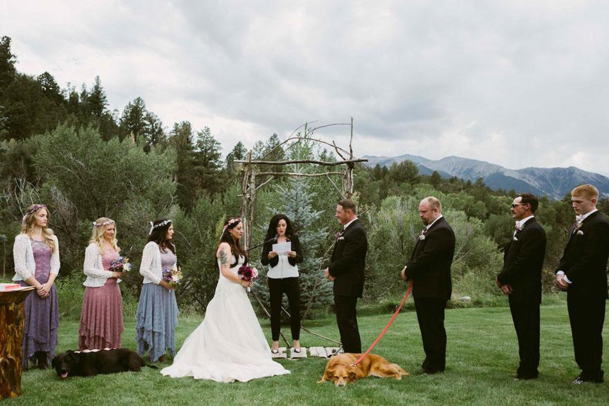 chien-de-15-ans-reste-en-vie-pour-voir-le-mariage-de-sa-proprietaire-2