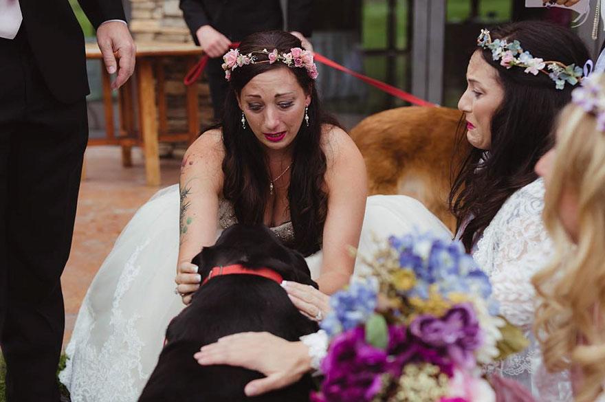 chien-de-15-ans-reste-en-vie-pour-voir-le-mariage-de-sa-proprietaire-8