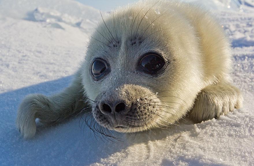 cute-baby-seal-waves-photographer-alexy-trofimov-russia-04a