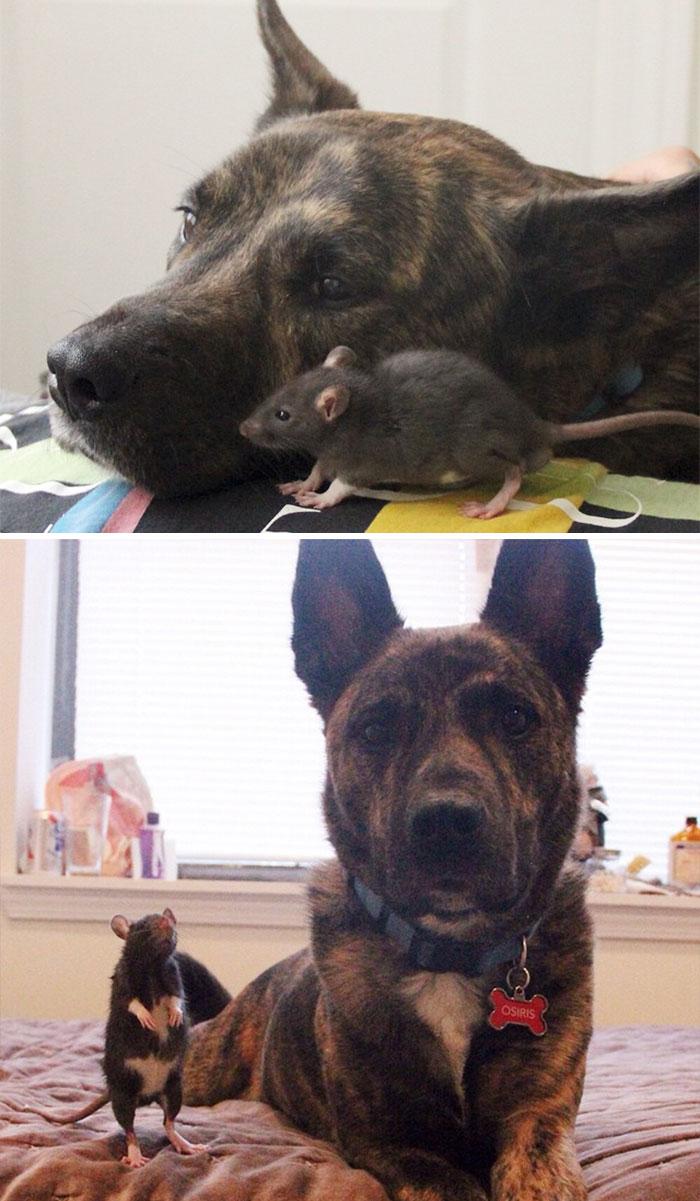 Des photos avant/après d'animaux qui grandissent ensemble