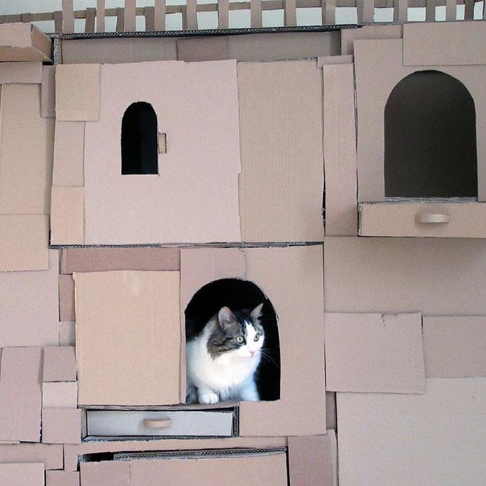 Il construit un dragon en carton pour son chat