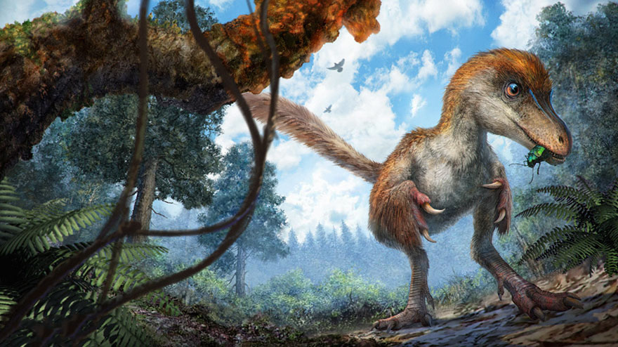La première queue de dinosaure trouvée intacte est recouverte de plumes
