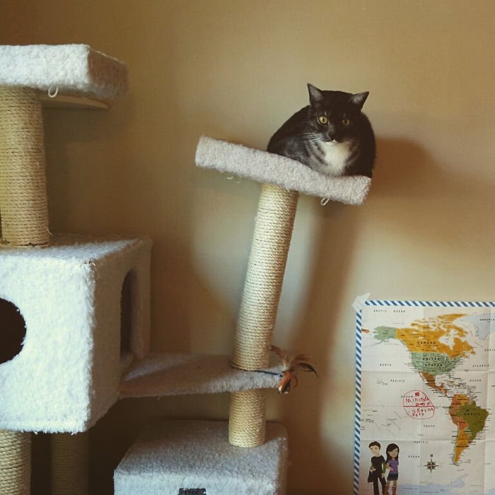 Le chat qui sen va tout seul texte