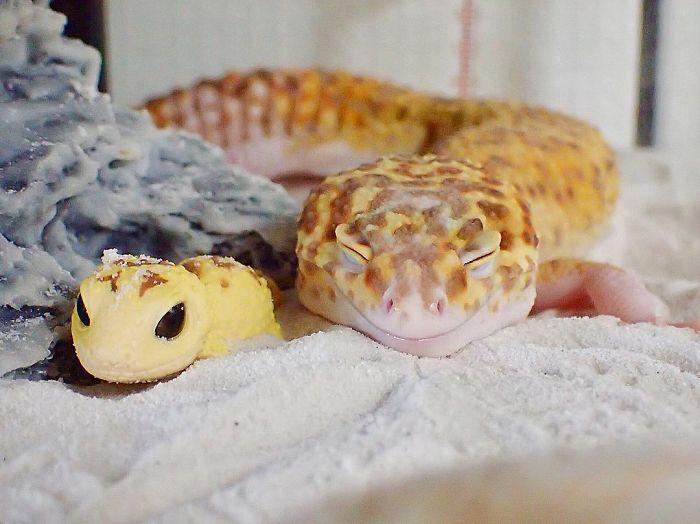 Ce gecko ne peut pas arrêter de sourire quand il est à côté de son jouet