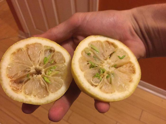 Estas fotos muestran lo que sucede cuando las frutas y las verduras comienzan a brotar a casa temprano