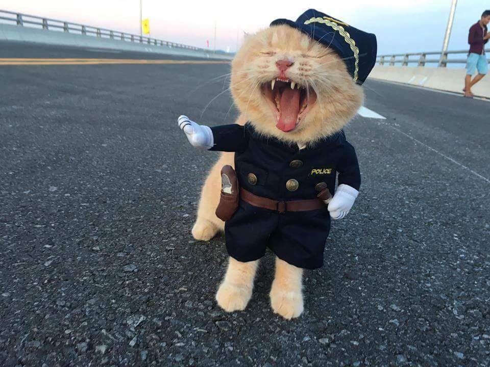Une nouvelle recrue dans les services de police