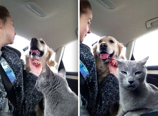 Plus de 75 photos hilarantes de chats et de chiens vivant ensemble