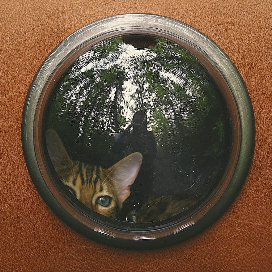 Rencontrez Suki, la chatte voyageuse qui vit une meilleure vie que la votre