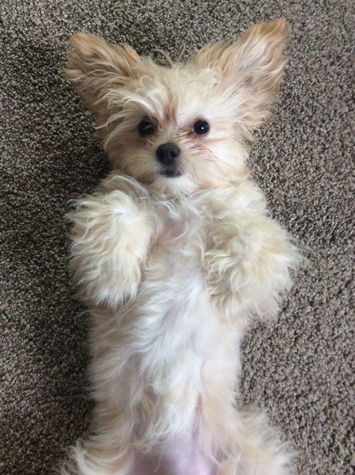 60 photos r confortantes de chien rencontrant leurs humains pour la premi re fois page 4 sur 9. Black Bedroom Furniture Sets. Home Design Ideas