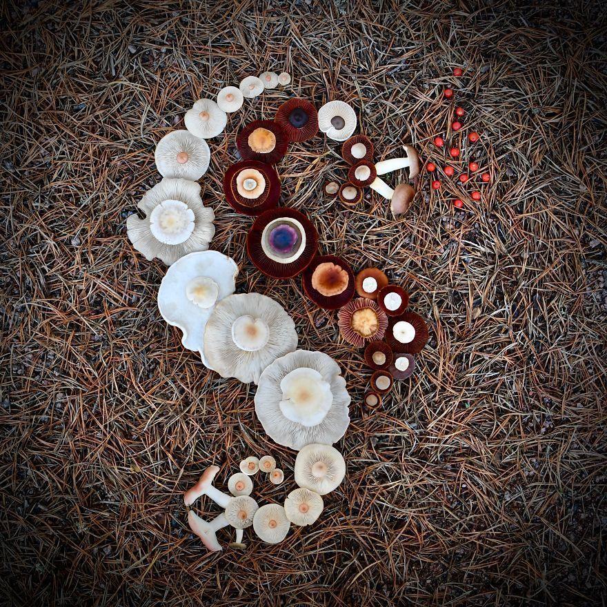 Elle crée son propre monde de rêve en utilisant des champignons sauvages