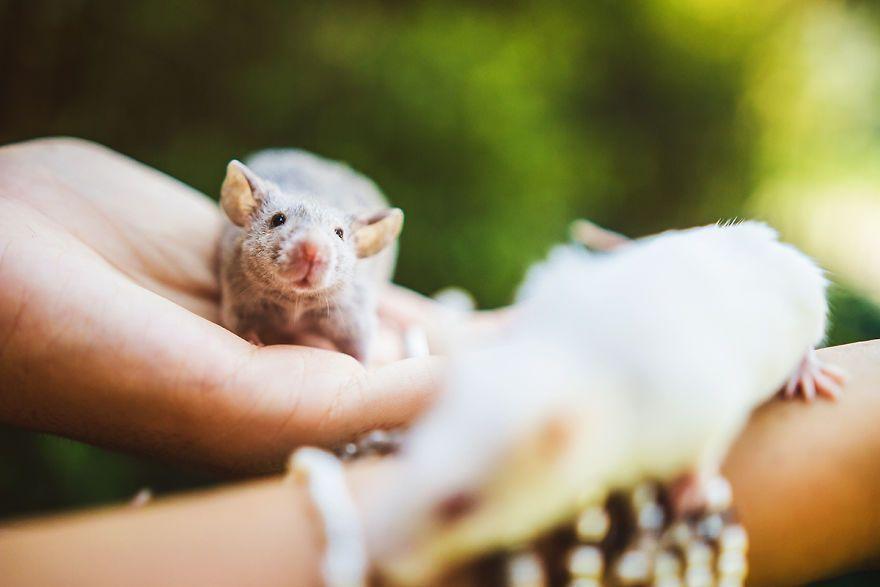 Elle photographie des rats et des souris de laboratoire qui sortent à l'extérieur pour la première fois
