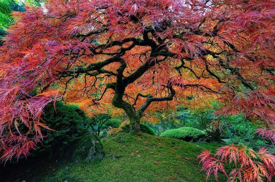 16 Des plus beaux arbres du monde