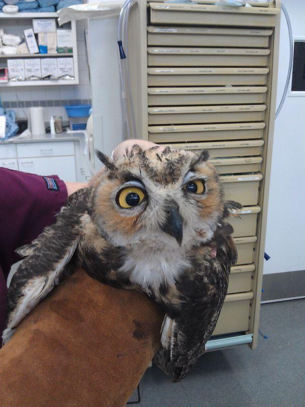 Plus de 40 animaux qui viennent juste de revenir de chez le vétérinaire, leurs expressions le disent tous