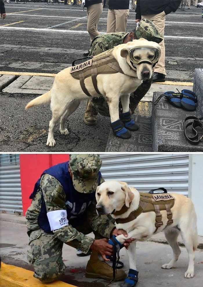 Voici 20 fois où des chiens ont surpris leurs humains grâce à leurs actes héroïques incroyables