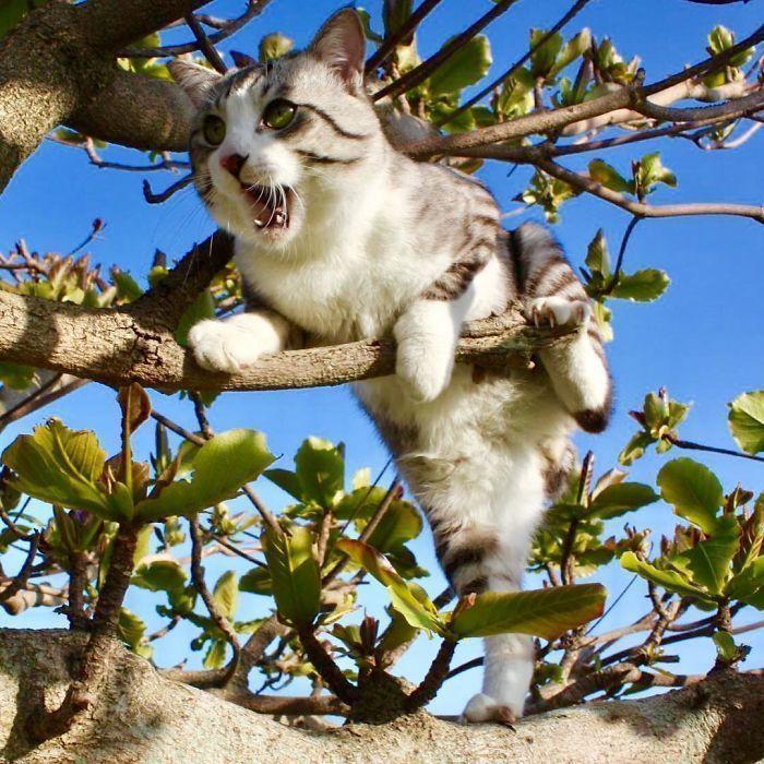 Ce chat est physiquement incapable d'avoir une mauvaise photo de lui.