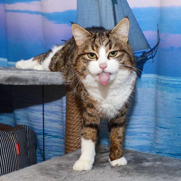 Ce chat prend Internet d'assaut avec ses expressions faciales hilarantes malgré son problème.
