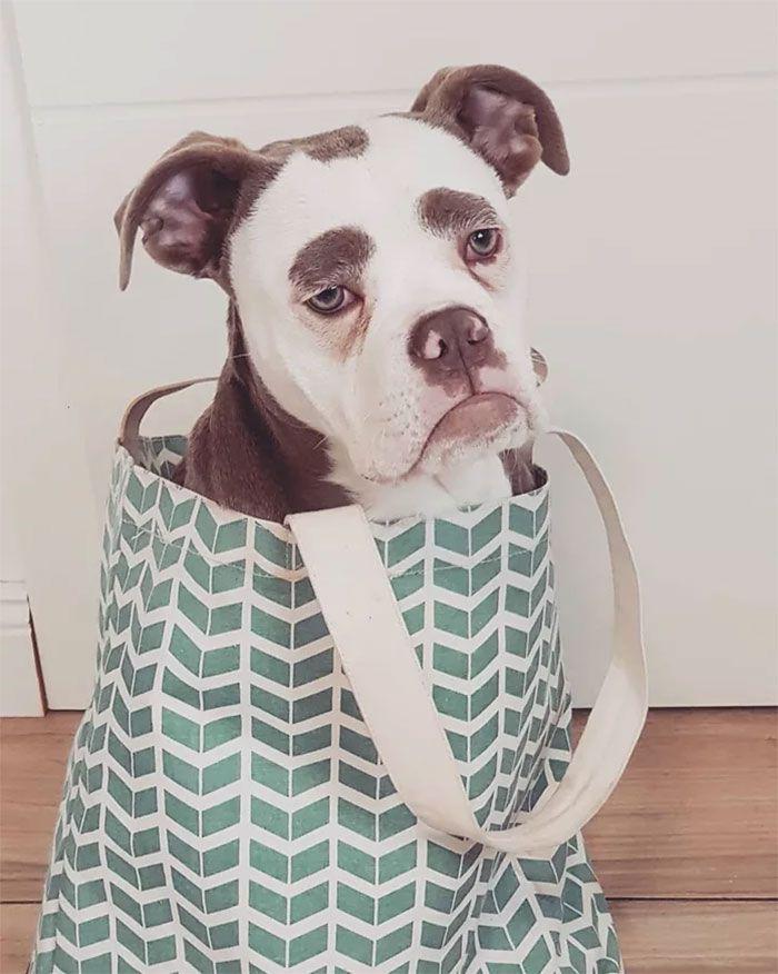 Rencontrer le chien au look le plus triste