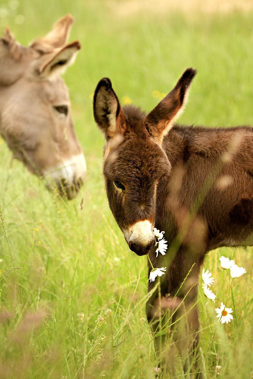 Il travaille dans un sanctuaire d'ânes où il photographie leur beauté tous les jours.
