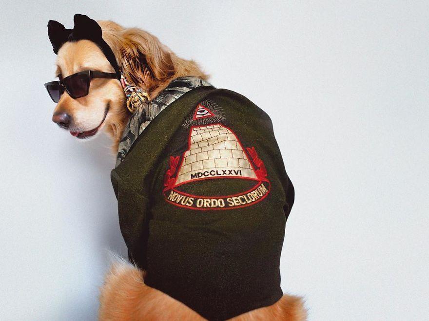 Ce chien recrée les photos de l'icône de Madonna et certaines s'avèrent encore meilleurs que les originales.