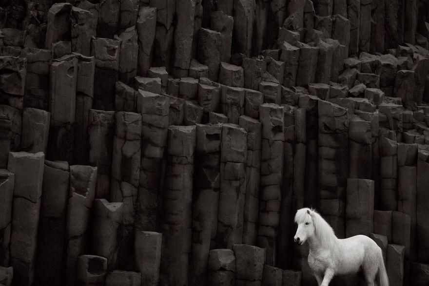 Images féeriques de chevaux vivant dans des conditions extrêmes en Islande.