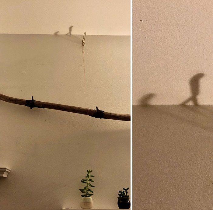 20+ ombres surprenantes qui nous y font regarder deux fois