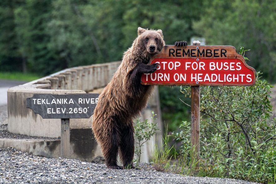 Les finalistes du Comedy Wildlife Photo Awards 2018 ont été annoncés, ils sont hilarants