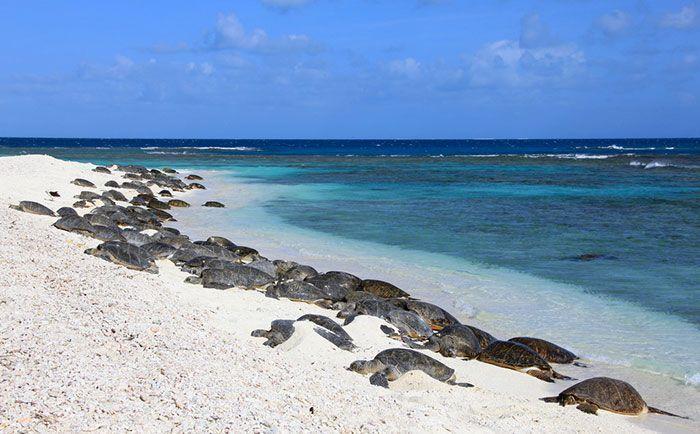 Les tortues reviennent à Indian Beach pour la première fois en 20 ans après le plus grand nettoyage du monde.
