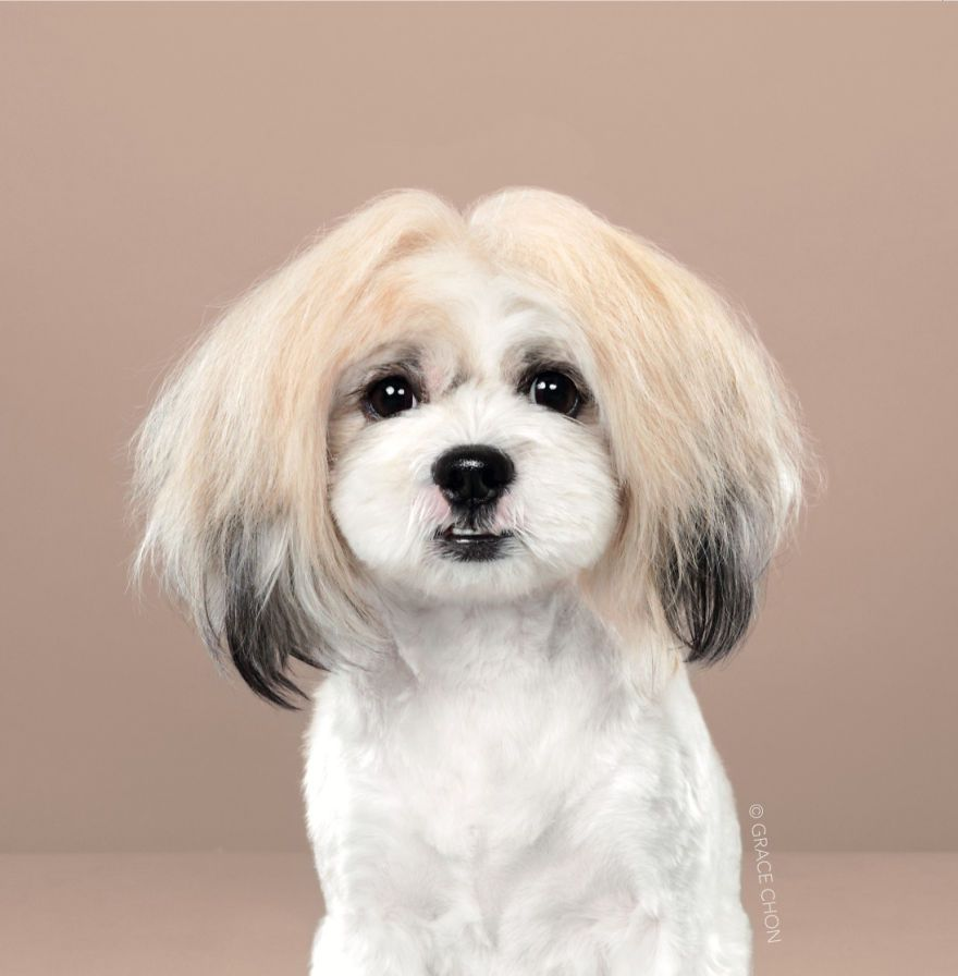 7 chiens avant et après leurs coupes