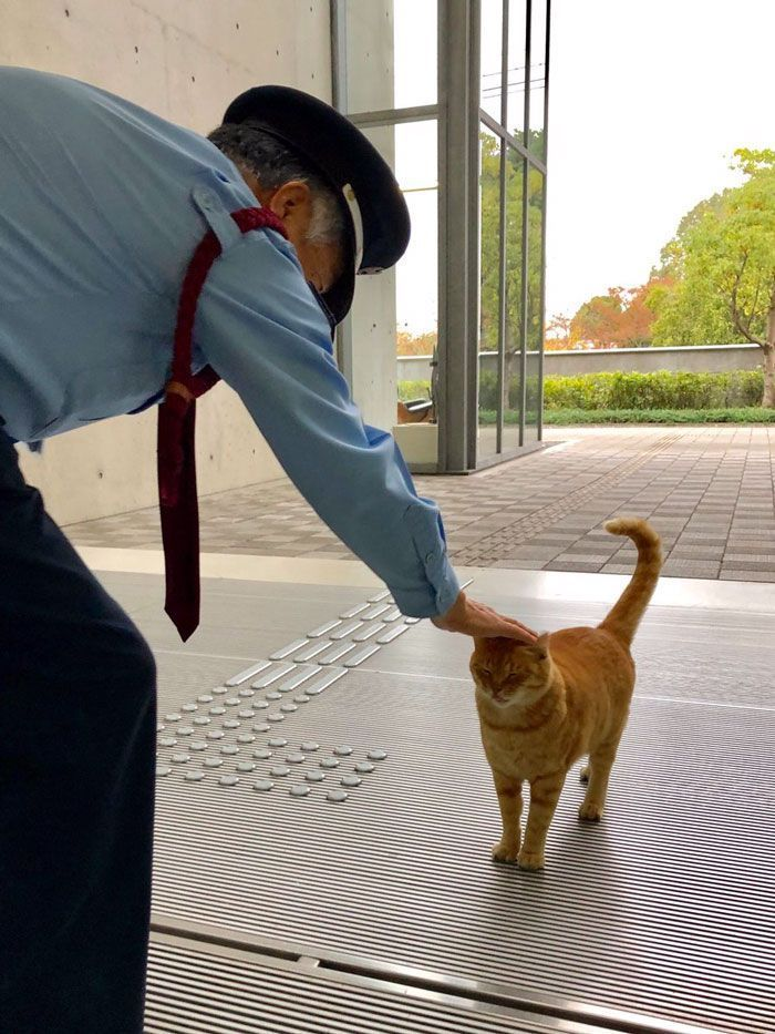Deux chats au Japon essayent de se faufiler dans un musée depuis des années (30 photos)