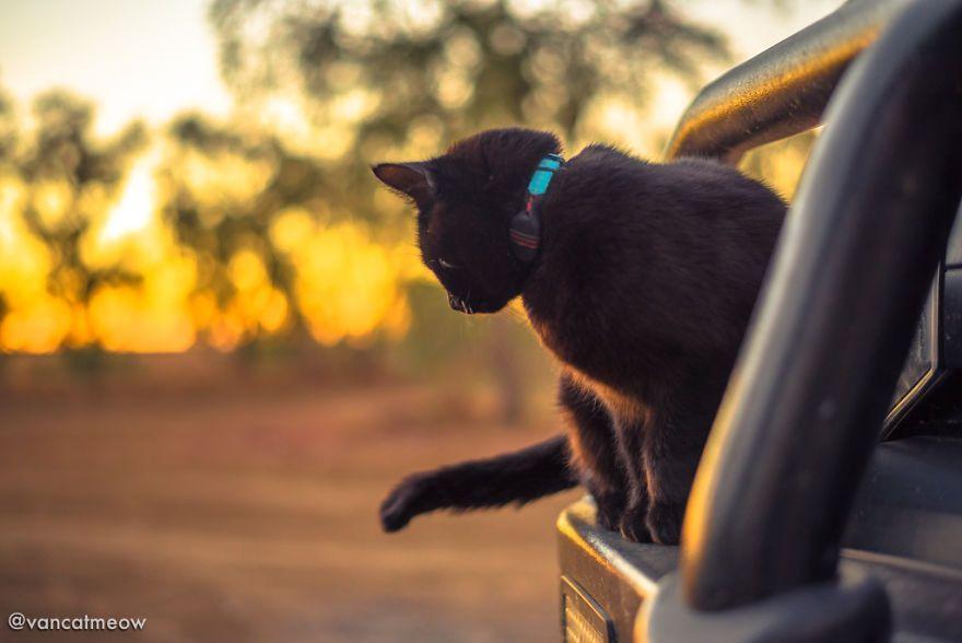 Il passe plus de 3 ans à voyager avec son chat dans un camping-car
