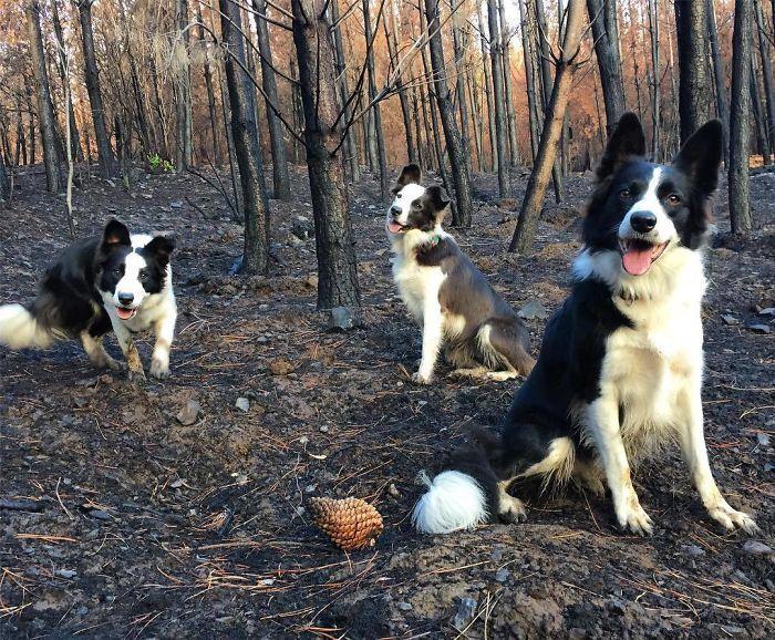 Le Chili trouve une façon géniale de restaurer les forêts brûlées, et tout ce dont ils ont besoin, c'est de 3 chiens