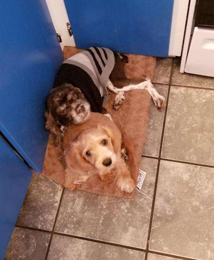 Un chien abandonné se transforme quand 3kg de vieux poils lui sont enlevés