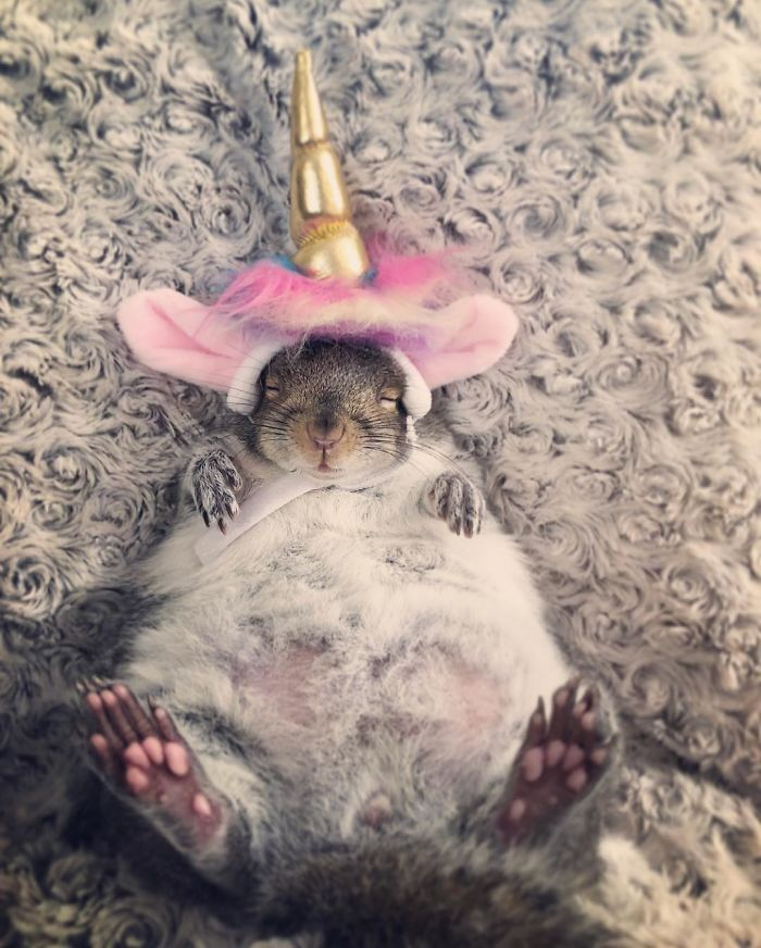 Un homme trouve un bébé écureuil, il devient l'animal de compagnie le plus adorable.