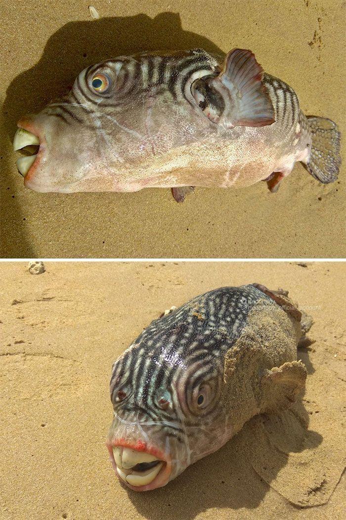 Un pêcheur russe montre des créatures terrifiantes des grands fonds marins
