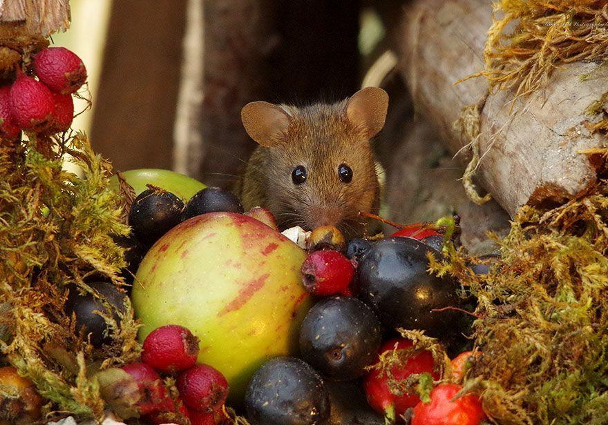 Un photographe découvre une famille de souris dans son jardin, il construit le village le plus mignon de tous les temps.