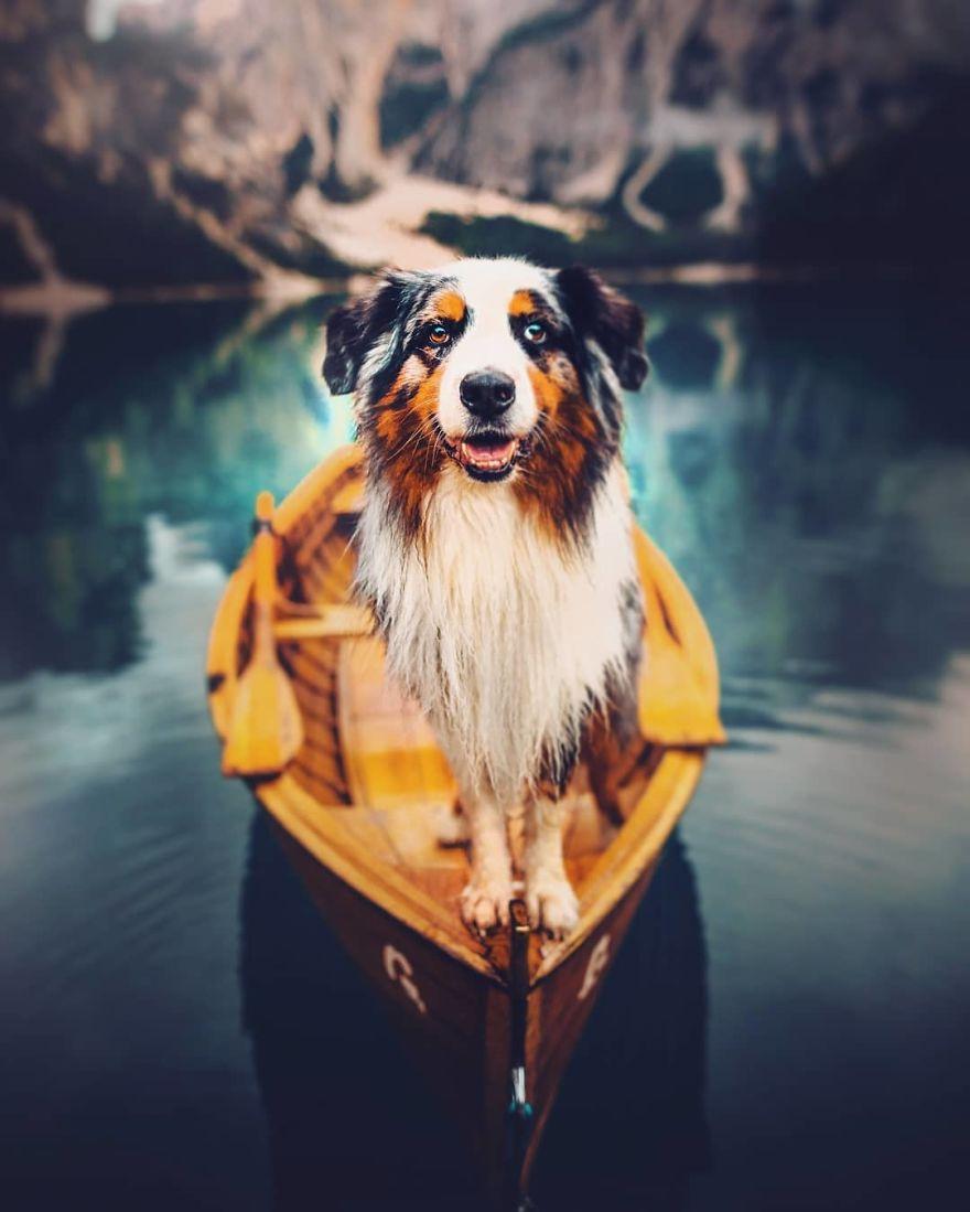 82 des meilleures photos de chiens par Kristýna Kvapilová