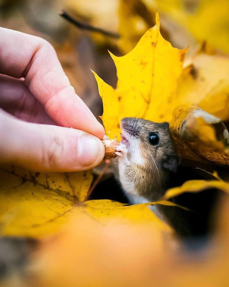 Ces 41 photos prises par un photographe finlandais sont  magiques.