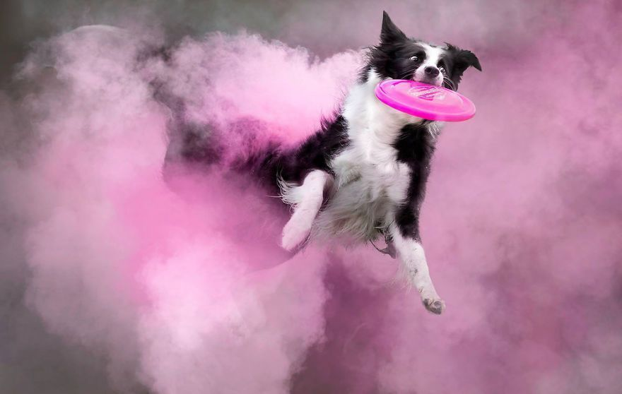I Tossed Powder On Some Dogs, And The Result Turned Out Amazing (13 Images)