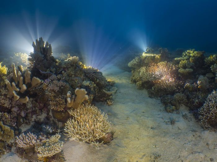 The Winners Of The 2018 Ocean Art Underwater Photo Competition Will Take Your Breath Away