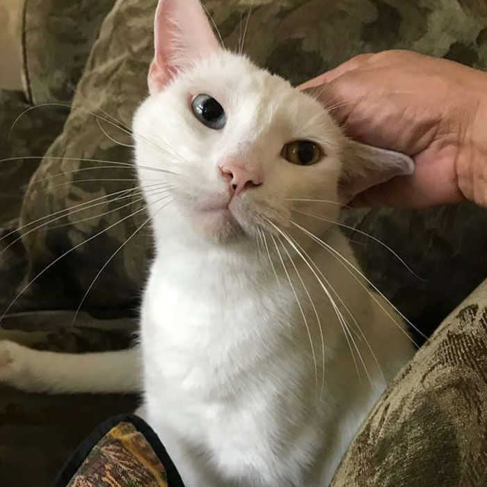 Woman Nurses Homeless 'Blind' Kitty Back To Health, Gets Amazing Surprise When He Opens His Eyes