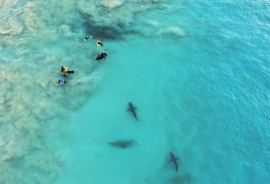 I Took These Jaw-Dropping Shots Of A Shark Frenzy In Western Australia
